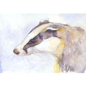 Badger_Study-Kate_Wyatt