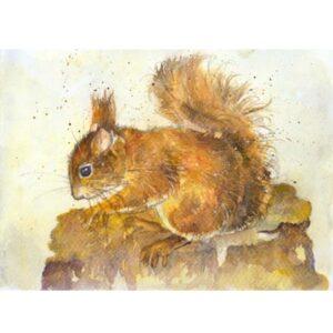 Red Squirrel Study by Kate Wyatt